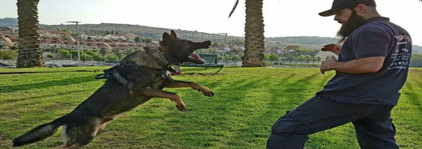 ההזדמנות החדשה שלכם אילוף כלבים
